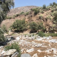 Oued De Montagne
