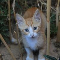 Un chat heureux au Maroc